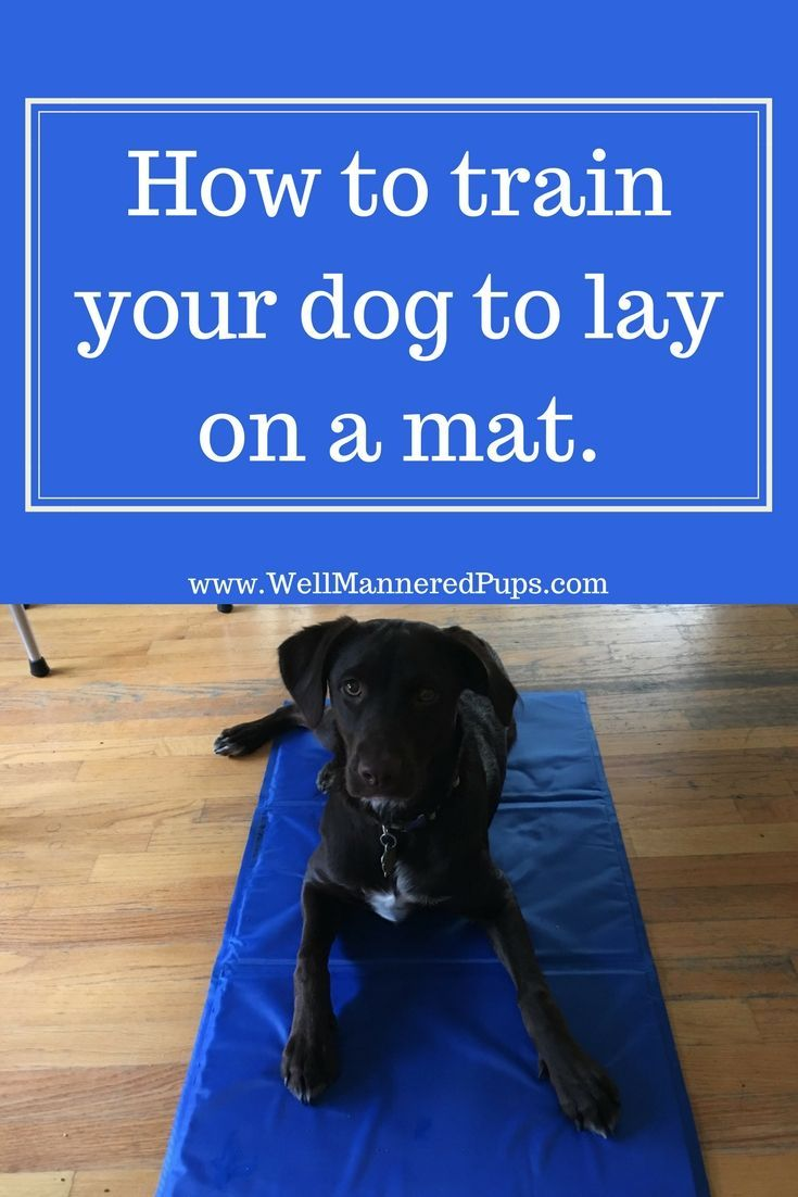 How To Train Your Dog To Go On A Mat Dog Training Techniques