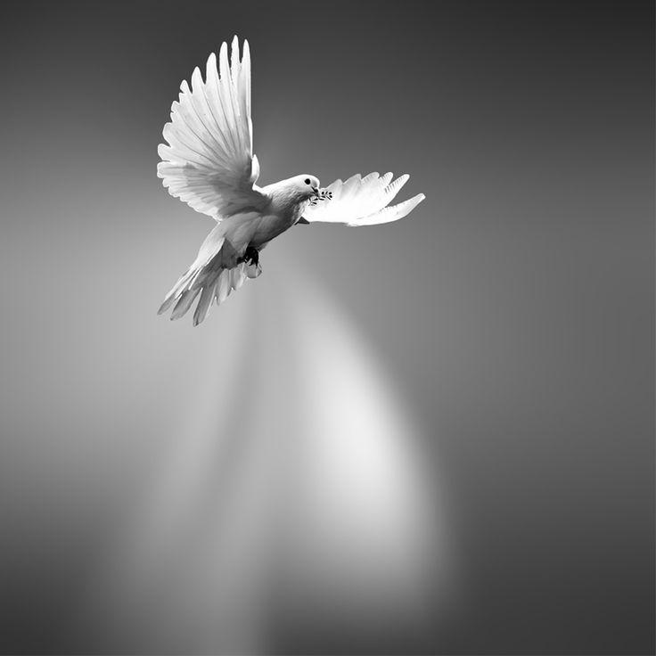 Peace - Pau ::: Peace ::: Paz