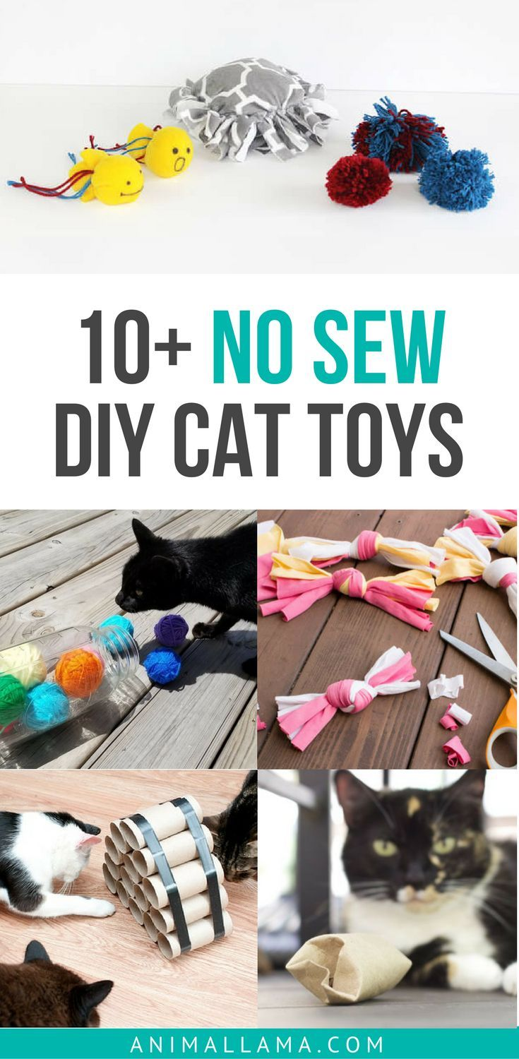 Keep your cat entertained with these simple and easy, no-sew DIY cat toys that are made out of household items! #diy #cats #cattoys #diycat #diycattoy