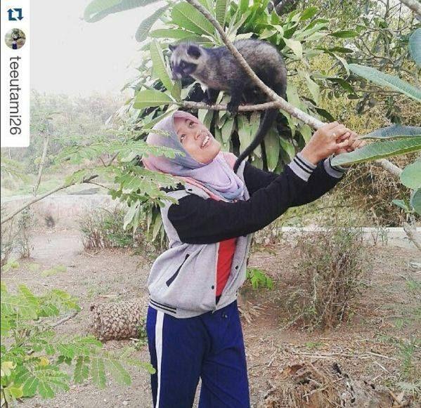 Foto kiriman @Teeutami26  Ini foto waktu jalan-jalan sore sama Richie di Bendungan Bandung Selis, Kutoarjo. Pas lihat pohon kamboja si Richie langsung naik pohonnya. Aku megangin ranting itu biar gak patah rantingnya. Karena si Richie gendut  #AnimalLoversEMCO