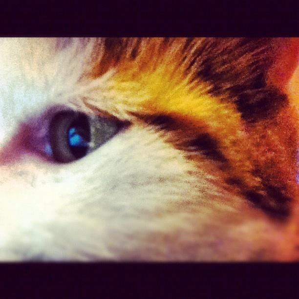 #cat #gato #animal #mirar #mirada