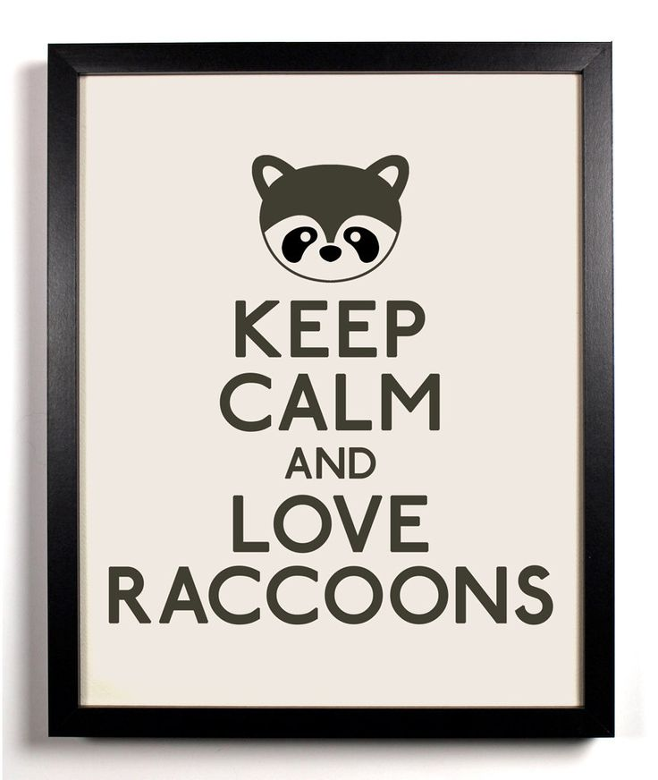 Love Raccoons and All Animals