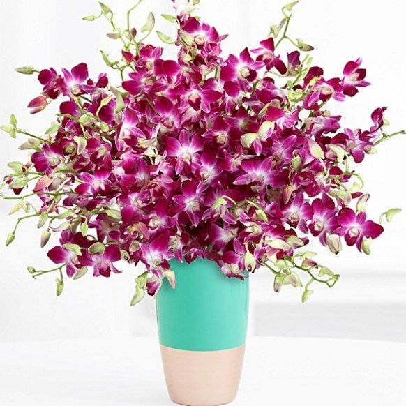 13 Moments To Remember From Cheap Flower Delivery Sydney Beautiful Orchids Dendrobium Orchids Orchids