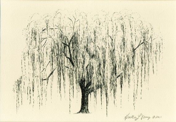 Weeping Willow Tree Drawing Aurora No 1 in Natural by theinklab, $30.00