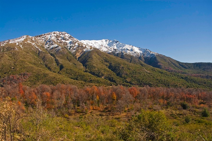 Alto Huemul Sanctuary of Nature, Chile. Support biodiversity #conservation and #indigenous leaders by contributing to our indiegogo campaign: http://www.indiegogo.com/projects/indigenous-leader-scholarships-latin-american-conservation-congress/x/1273897