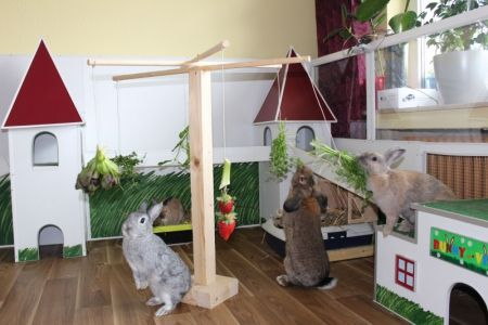 kaninchen futterbeschäftigung