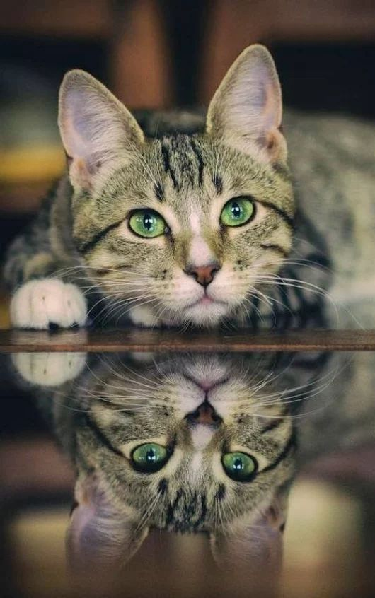 Be like a mirror show who you are actually don't be double standard like me