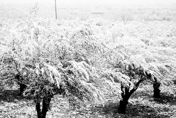 First snow of the season! - www.elirisgreece.com