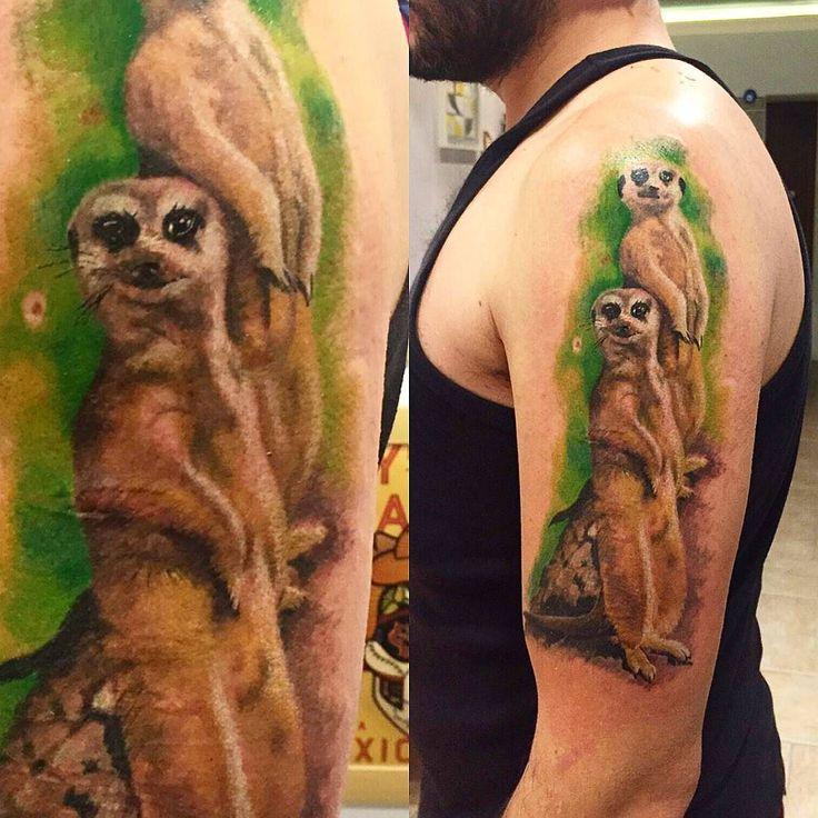 66 Best Images About Meerkats On Pinterest