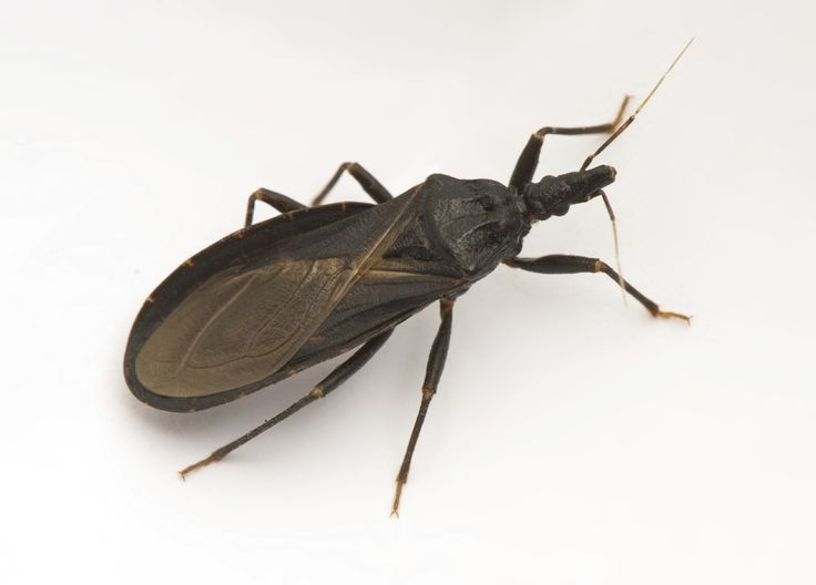 Best photos, pictures, and images about bugs - Types of Bugs