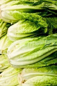 growing romaine lettuce - in a container