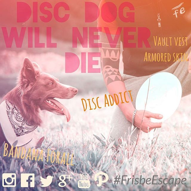 FrisbeEscape produce the newest equipment for disc dog.          unique and innovative disc design (228mm) strong Vault Vest made by technical fabric (from S to XL) Colorfull Bandanas for you and your dog (3 Colours) Customization.  For more info: Info@frisbeescape.com ✌Visit our official page on Instagram Facdbook Twitter Google plus Youtube Pinterest  #discdog #frisbee #disc #flydisc #flydog #vault #bandana #mascota #perro #cane #vault...