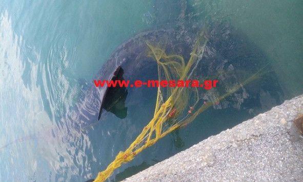 Καρχαρίας 7 μέτρων στην Κρήτη!