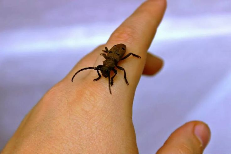 Sweet insect