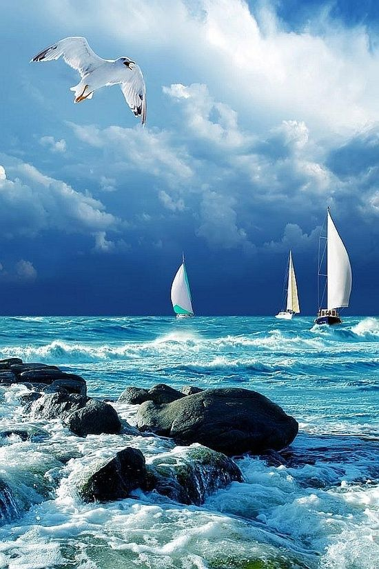 I must go down to the seas again, for the call of the running tide Is a wild call and a clear call that may not be denied; And all I ask is a windy day with the white clouds flying, And the flung spray and the blown spume, and the sea-gulls crying. ღ
