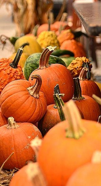 Autumn's Paint Brush- pumpkins...~LadyLuxury~