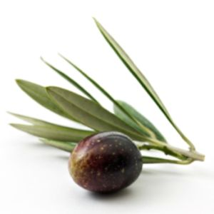 For a practical look at olive leaf health benefits and usage, see what this author says and why he can say it.