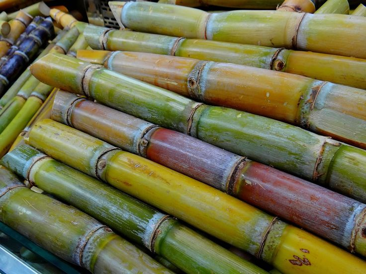 India: Sugar cane - Market Report. Analysis and Forecast to 2020