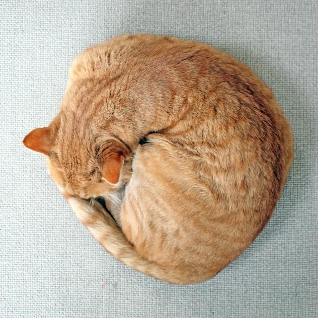 Read this cat sleep article for understanding your sleepy cat. Learn about sleep…