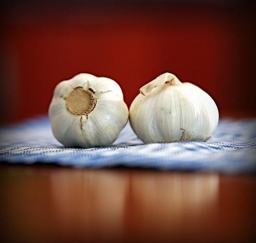 Remedios caseros contra el pulgón. El pulgón es una de las plagas más comunes de las plantas, se trata de unos pequeños insectos que se encargan de chupar la savia de sus hojas, consiguiendo deformarlas y comprometer su salud. Aunque e...