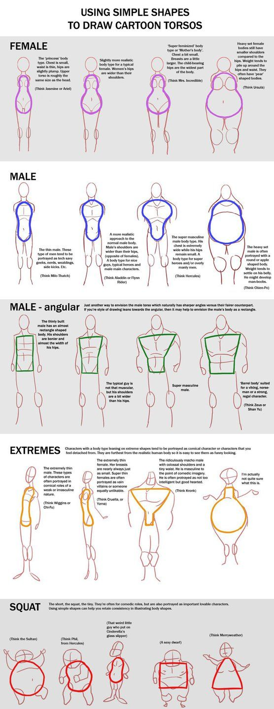 Chart - Cartoon Torso by macawnivore on DeviantArt