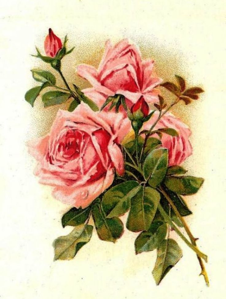 Старая открытка розы