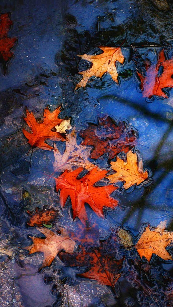 Wallpaper iphone autumn - Sun Sets Goldfish Phone Wallpapers Funds