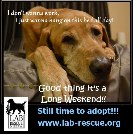 It's here...it's here!!! Long weekend! YAY. Extra time to submit an application to adoptLabs Rescue, Labs Ul, Long Weekend, Rescue Promo, Extra Time