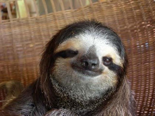 Sloth = best hairdo ever.