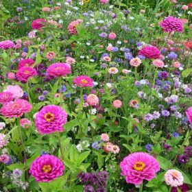 96 besten Bauerngarten Bilder auf Pinterest | Bauerngarten ...