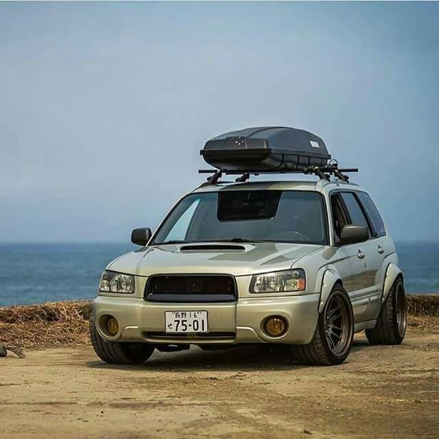 Another gorgeous forester.
