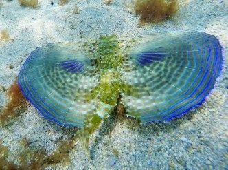 Snorkeling in Tayrona