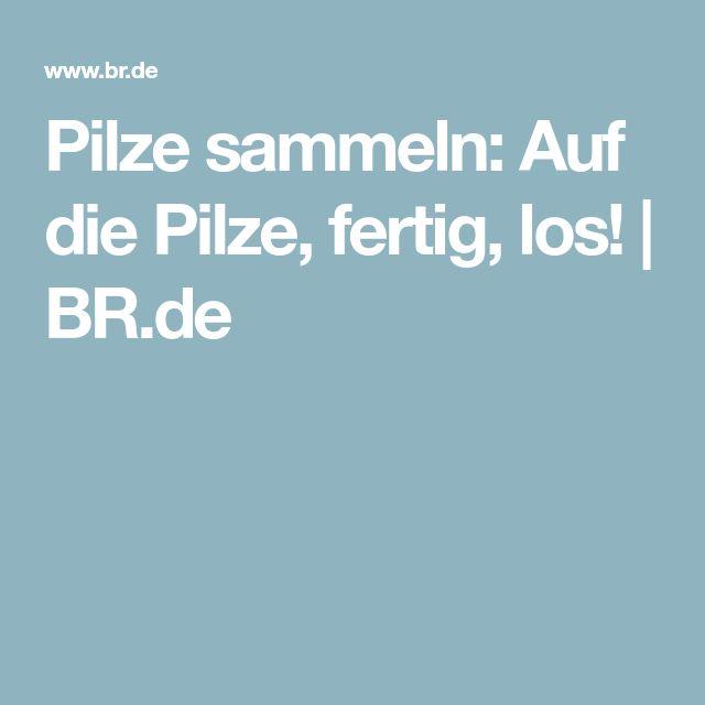 Pilze sammeln: Auf die Pilze, fertig, los! | BR.de