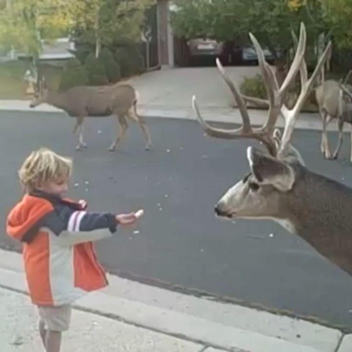 Little boy is feeding the deer