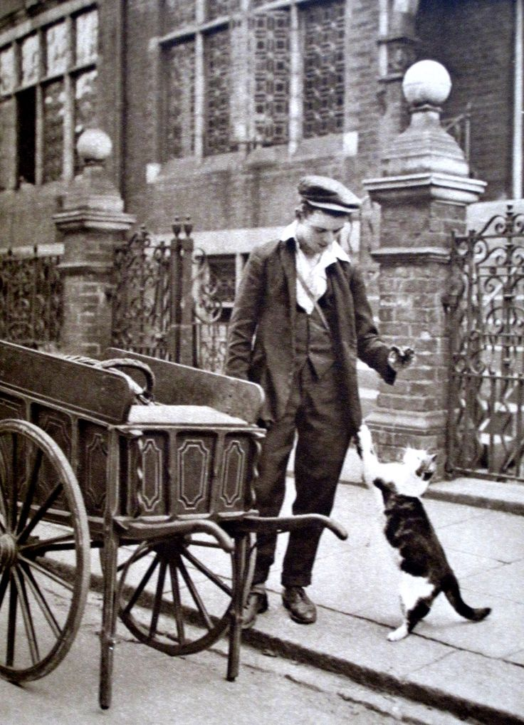 London's Workers: The cat's meat man in 1922. Wonderful London - Edited by St John Adcock. Published 1922 by The Fleetway House, London, EC.