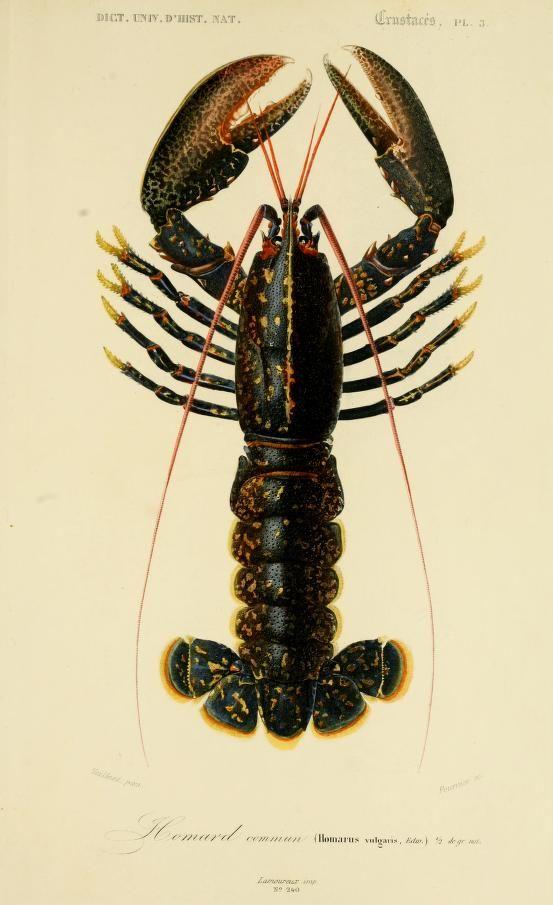Atlas: v. 2, Ed. 2 - Zoologie (Reptiles & Poissons articules) - Dictionnaire…