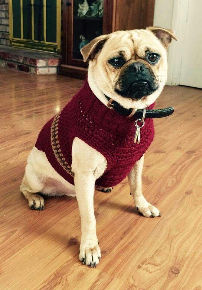 Mejores 413 imágenes de Cosas que adoro en Pinterest   Perros ...