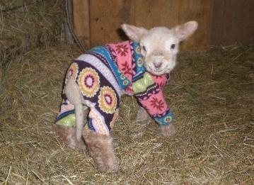My Hobby Farm For Sale Lamb Pajamas Goat Kid Coats Pet