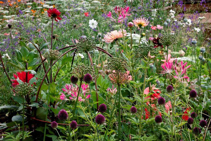 Petersham Nurseries cutting garden. British grown cut flowers!