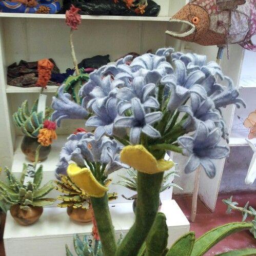 Plants n' pots 2014