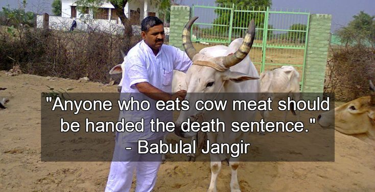 Death to the Beef Eaters? Religious intolerance is on the rise in India, as vigilante mobs of right-wing Hindus attack those suspected of eating beef or slaughtering cows.