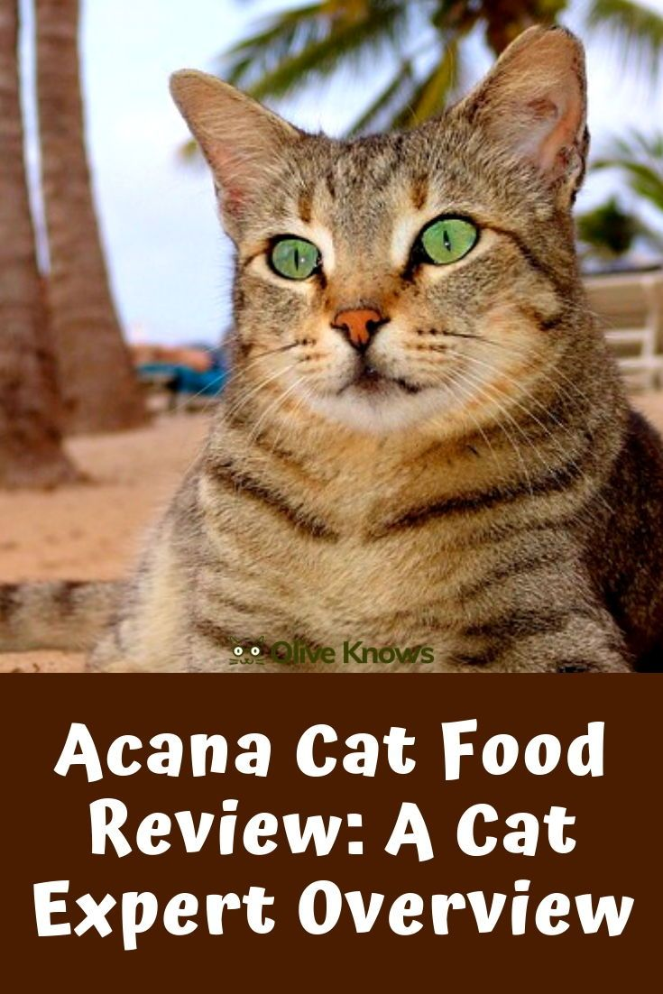 Acana Cat Food Review A Cat Expert Overview Cat Food Cat
