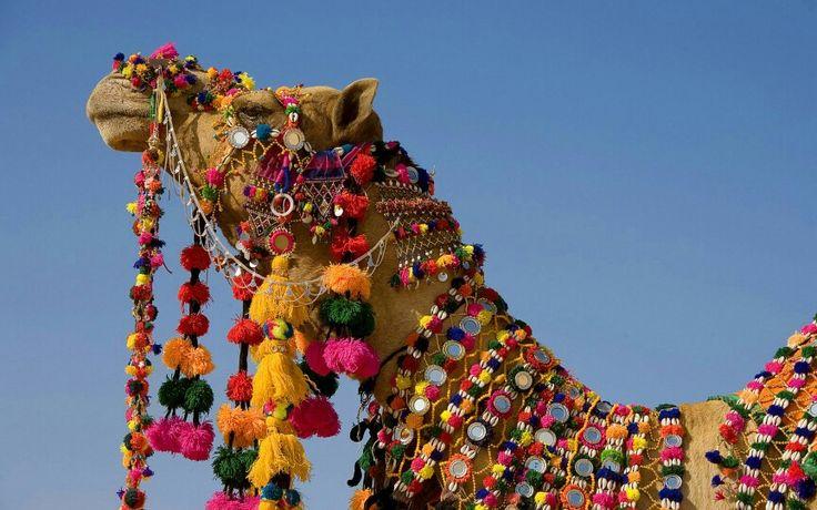Voyage à dos de chameaux
