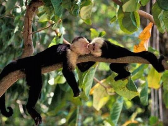 animals kissing | 12 cute Pictures of animals kissing