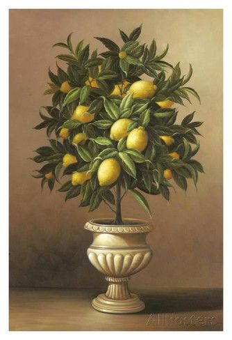 Potted Lemon Tree Posters By Welby At Allposters Com