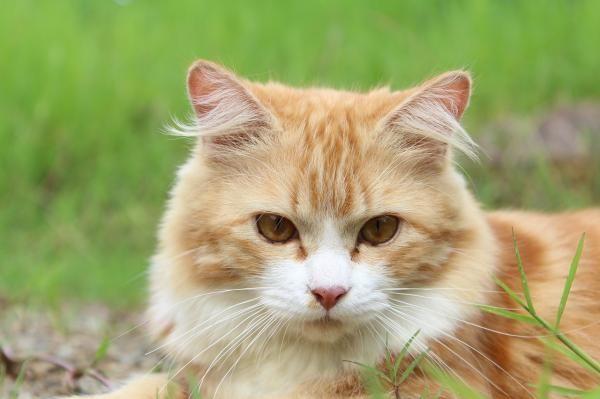 Cuidar a un gato #mascotas #gato #animales #gatos #felino