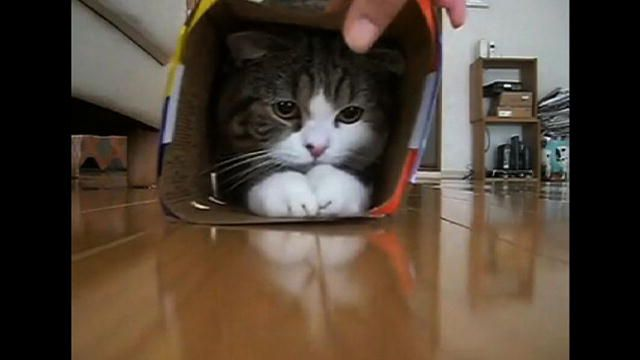 OK, I swear this is the last one! 2012 Internet Cat Video Festival - Playlist of 20 videos.