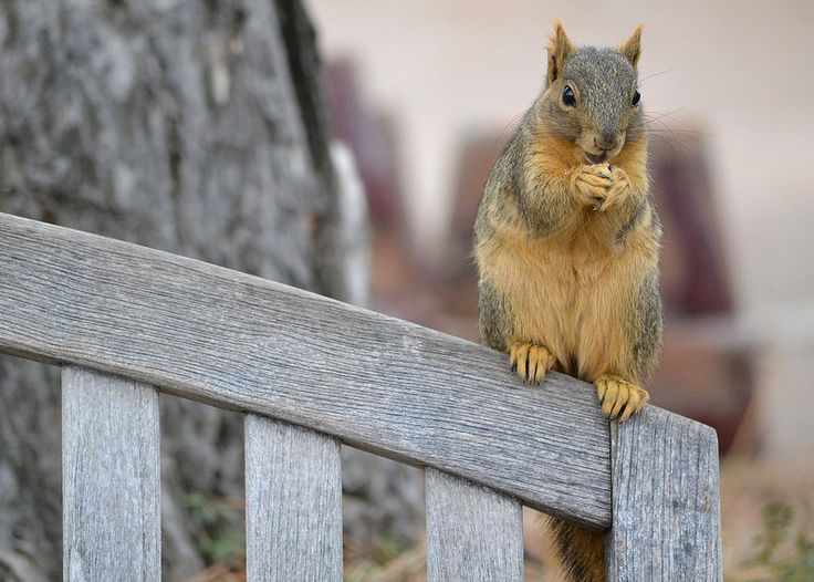 20 Interesting Peanut Facts. - Random Facts