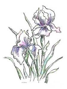 10+ images about line drawings of irises on Pinterest ...