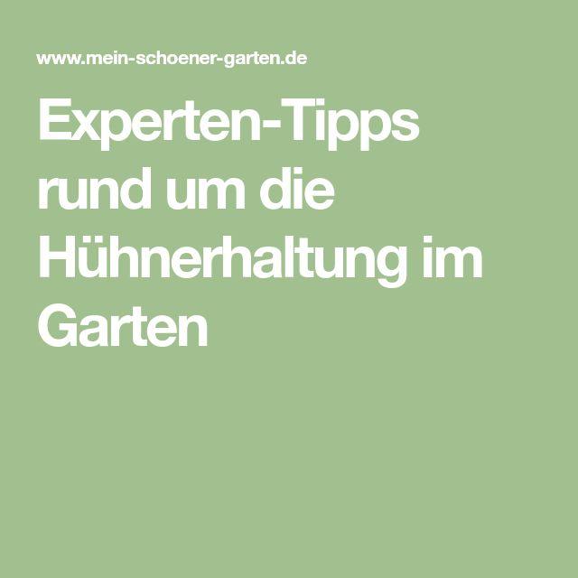 Experten-Tipps rund um die Hühnerhaltung im Garten